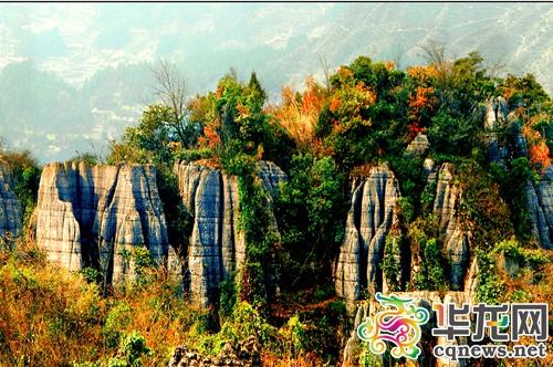 中国森林的储藏量 居世界第几位 人均占有量及居世界第几位图片