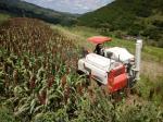 机收高粱 - 农业机械化信息