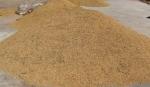 收获的稻谷 - 农业机械化信息