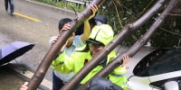 暴雨后江北民警抬树救车 - 公安厅