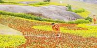 一月十九日,渝北区桃源大道一处由荒地整治而成的绿地,工人正在进行维护工作。记者 罗斌 摄 - 重庆新闻网