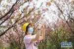 (社会)(4)放牛坪的春天 - 新华网