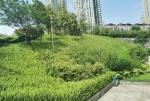 鸿恩寺公园上新9万株鲜花 你确定不来看看? - 重庆晨网
